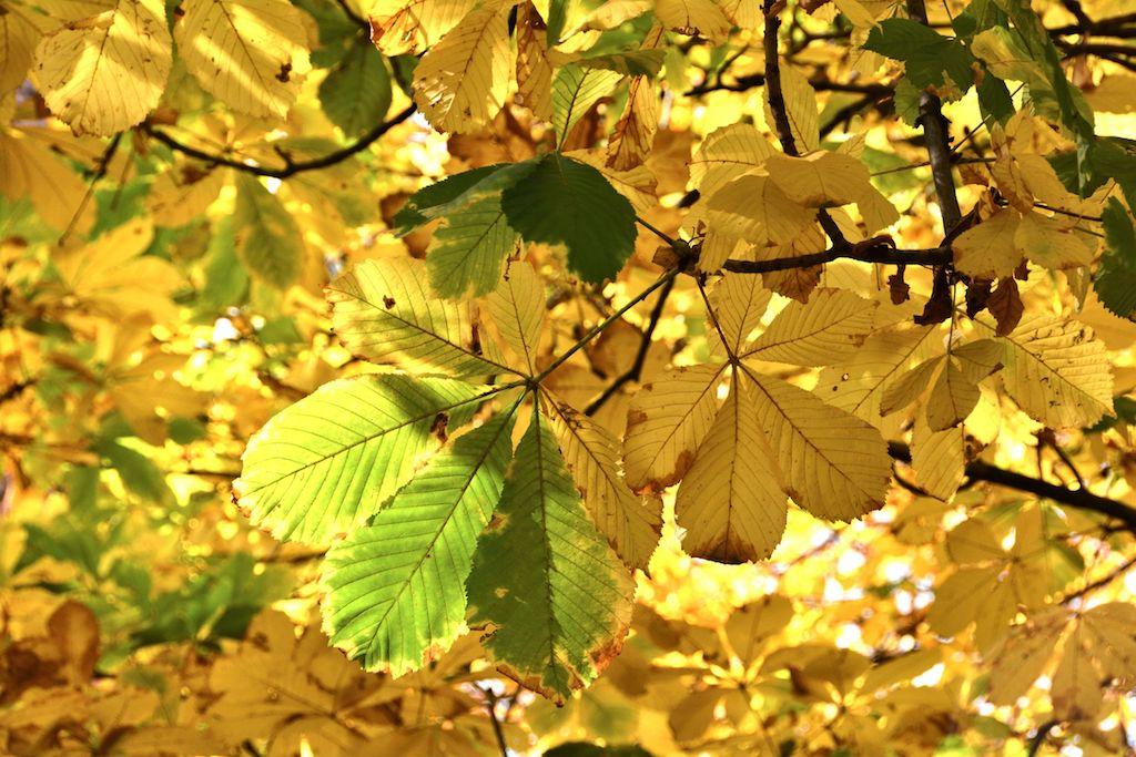 goldene Blätter Heilarbeiten Konrad Bechter