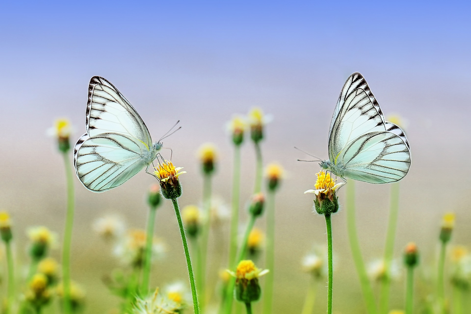 ganzheitliche Beratung Butterfly
