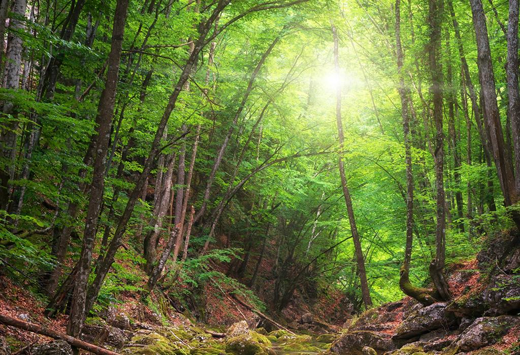 erleben Wald lichtdurchdrungen